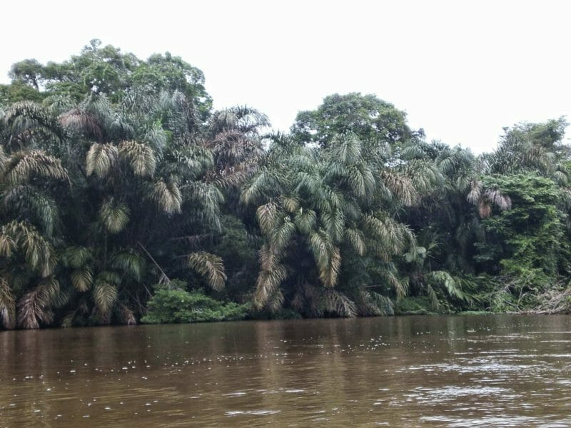On the way to Tortuguero