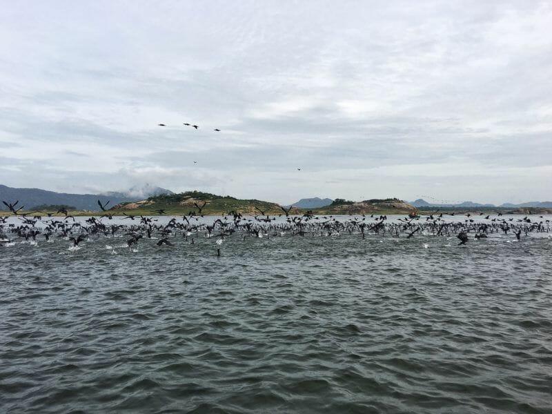 The incredible animal life at Gal Oya National Park