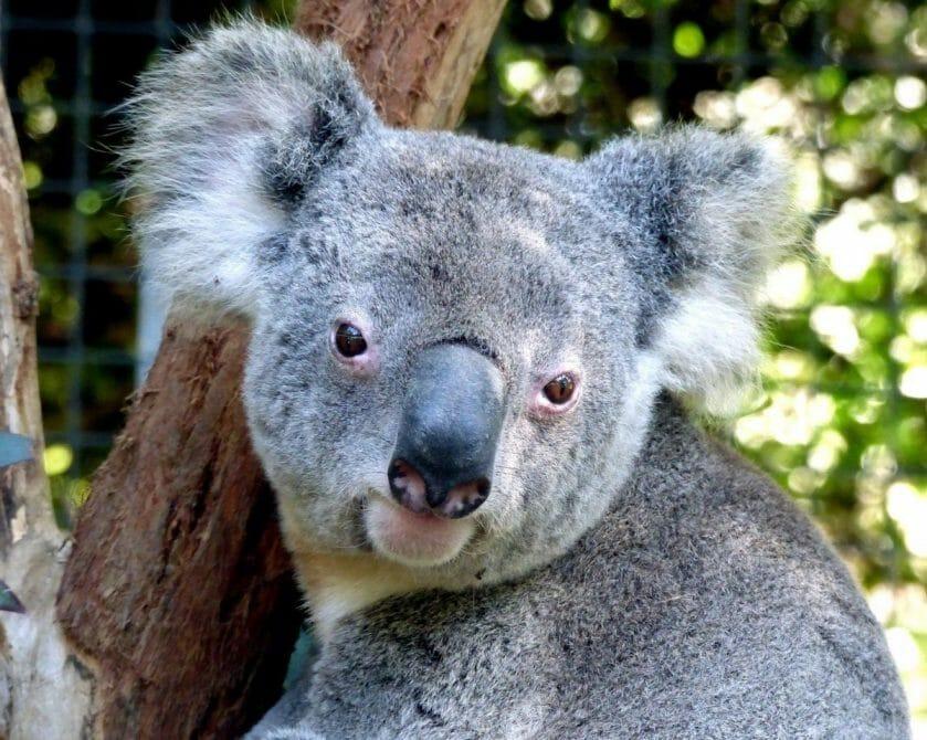 Australia responsible tourism