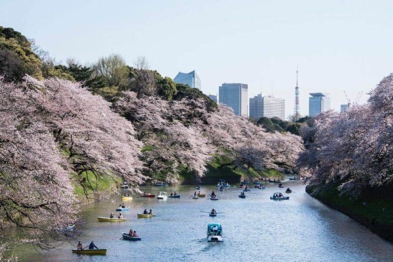One week in Japan