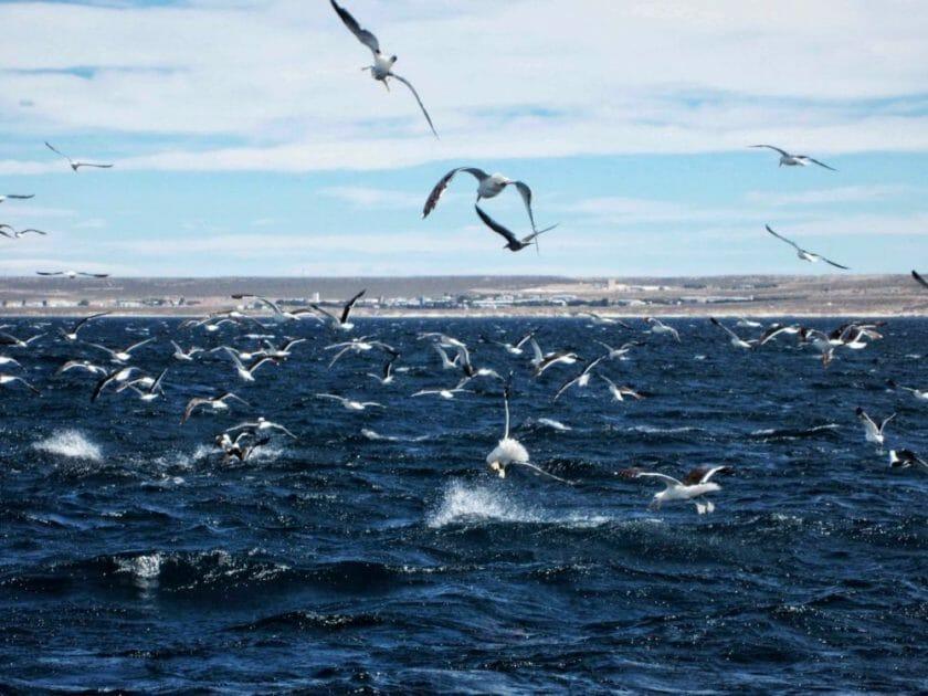 Puerto Madryn Chubut
