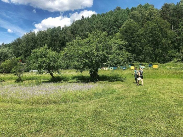 meadows in Guaja National Park