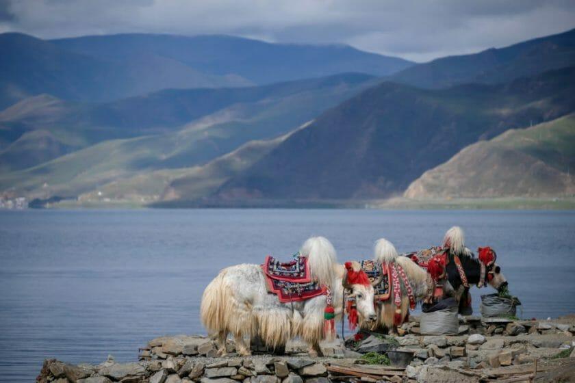Traveling to Tibet
