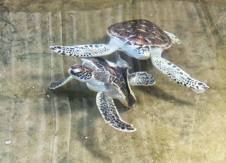 rescued turtles