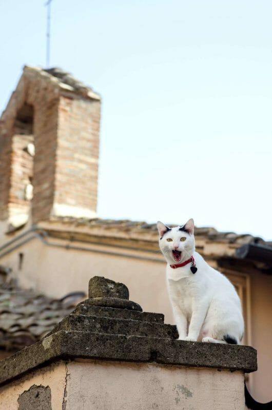 cat in Castel Gandolfo