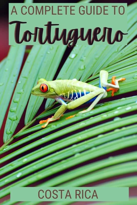 Learn how to make the most of Tortuguero, Costa Rica - via @clautavani