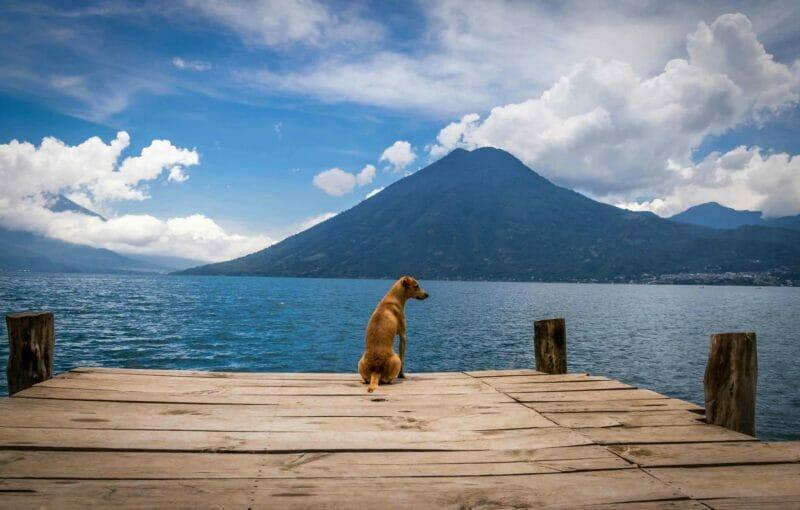 Dog at Atitlan