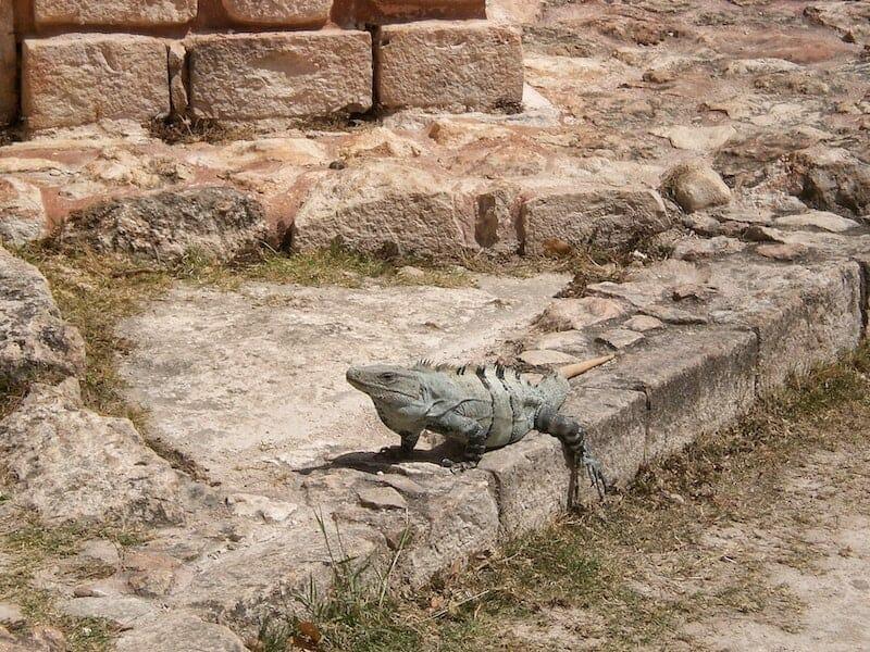 Uxmal Ruins Mexico